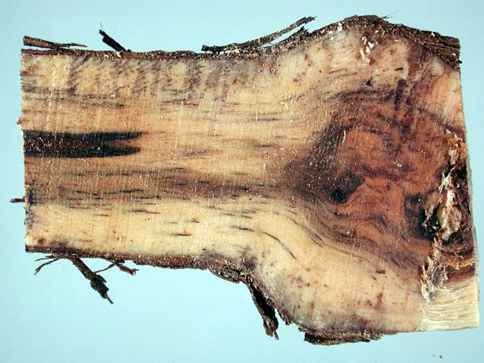 iska_wood